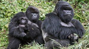 ABOUT BWINDI IMPENETRABLE NATIONAL PARK