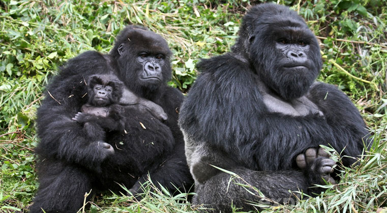 ABOUT BWINDI IMPENETRABLE NATIONAL PARK
