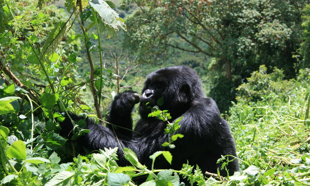 BEST TIME TO VISIT BWINDI IMPENETRABLE FOREST NATIONAL PARK