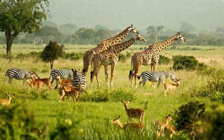 BEST PLACES FOR WILDLIFE VIEWING SAFARIS IN UGANDA