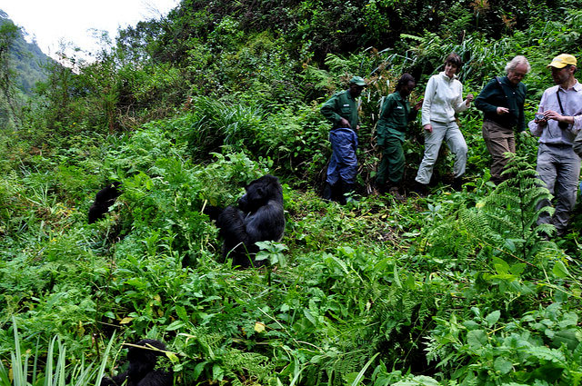 3 Day Bwindi Gorilla Trekking Tour Sahara Tours And Travel