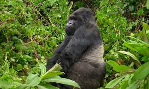 10 Day Uganda Gorilla And Wildlife Safari.