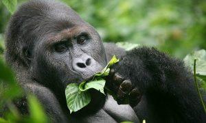 11 DAYS Uganda and Rwanda