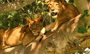 3 days Queen Elizabeth and Bwindi Safari